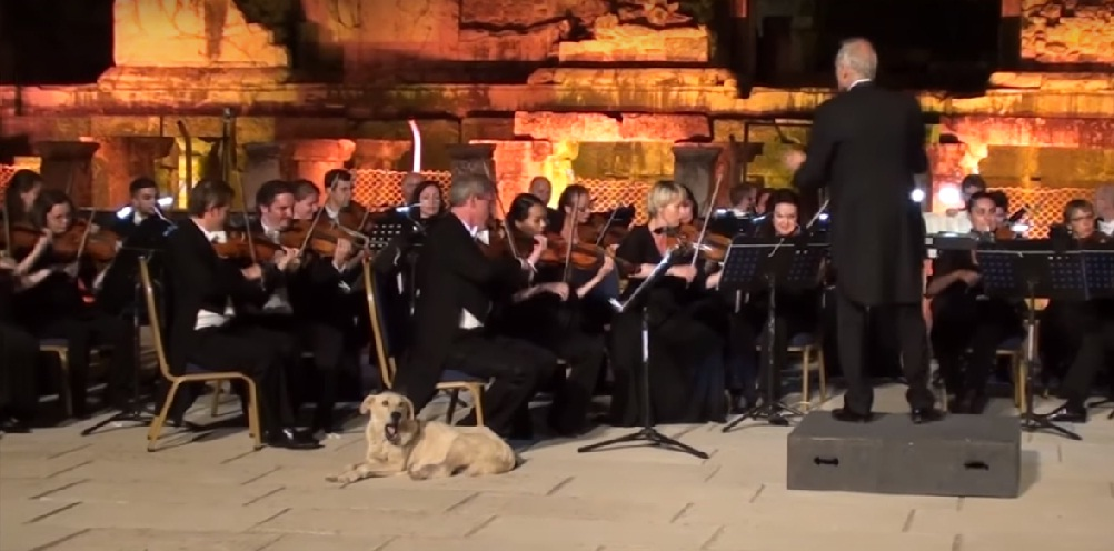 Dog at classical concert