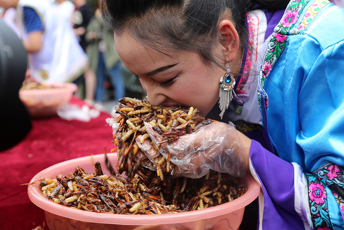 insect eating competition