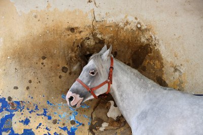 horse Beirut Hippodrome, Lebanon