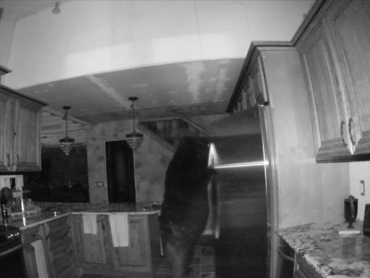 Bear inside Colorado home
