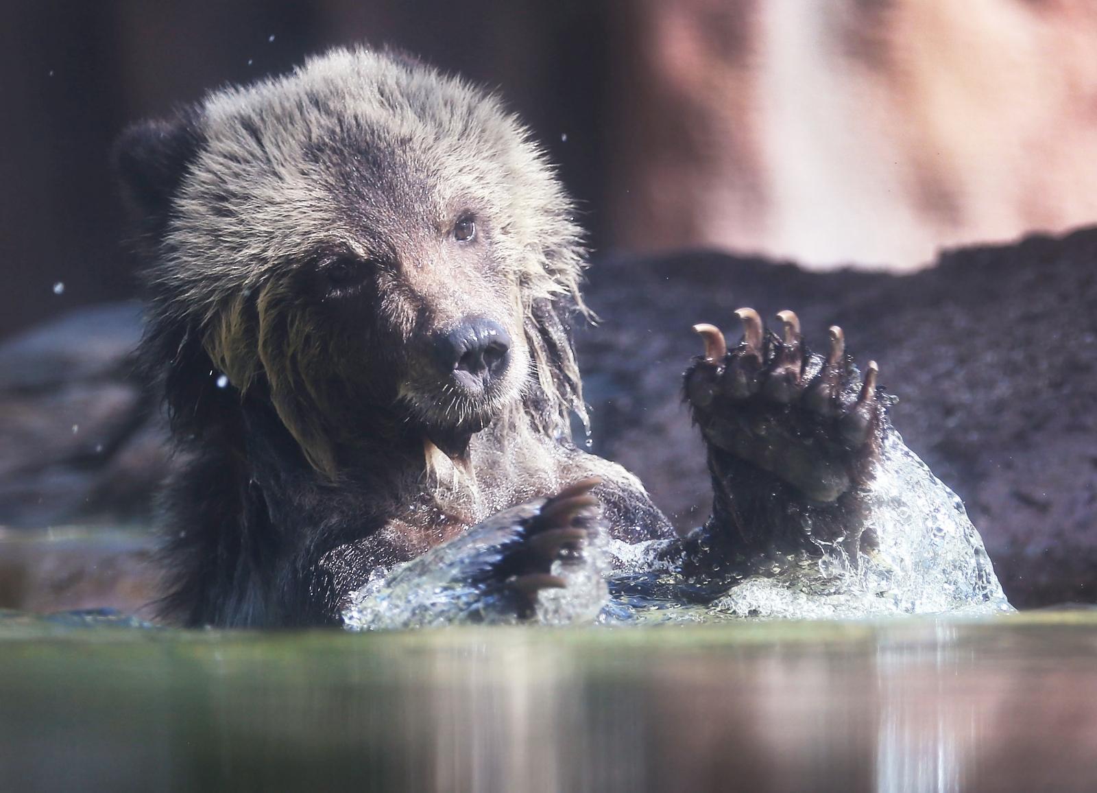Bear cub at Palm Beach Zoo