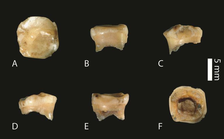 Denisovan fossil