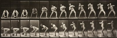 Eadweard Muybridge Animal Locomotion