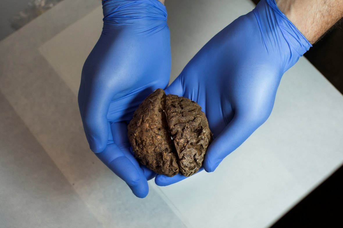 Spanish Civil War brains heart mass grave