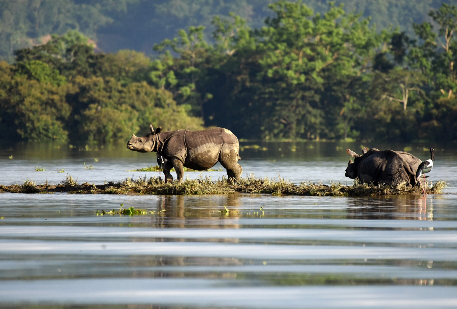 Floods kill six hog deer in Kaziranga National Park