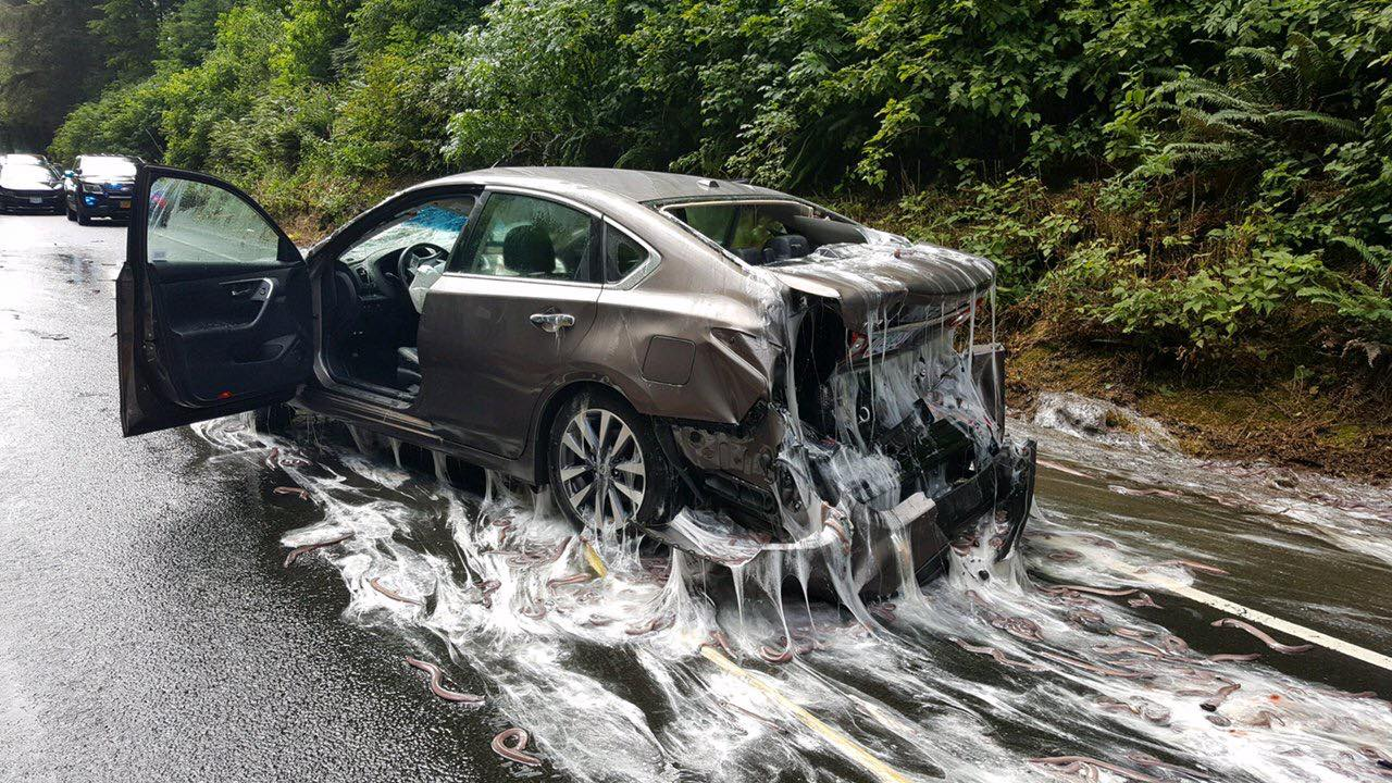 A car covered in eel slime