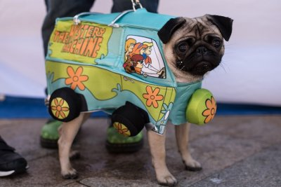 Pugfest 2017 Manchester Media City Salford