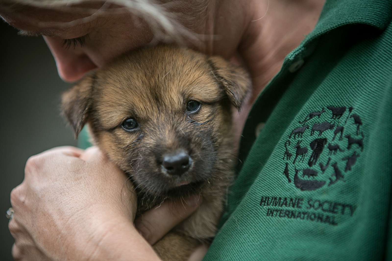 Puppy saved from death in South Korea