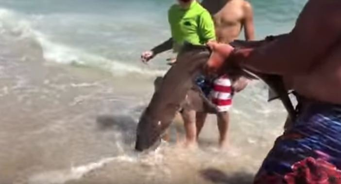New Jersey man saves shark's life