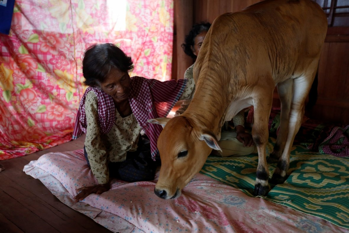 Cambodia calf reincarnation husband
