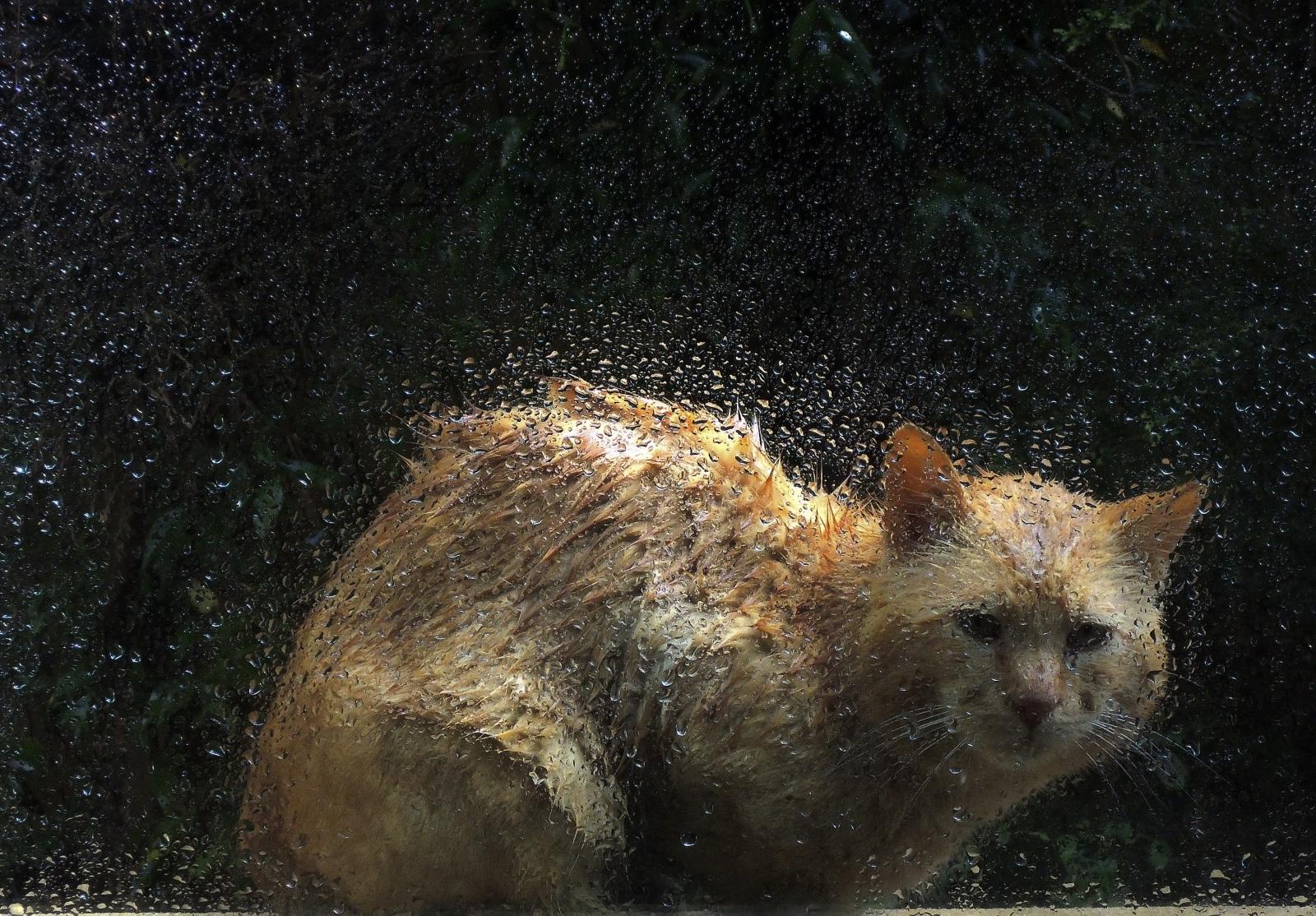Stray Tomcat cat