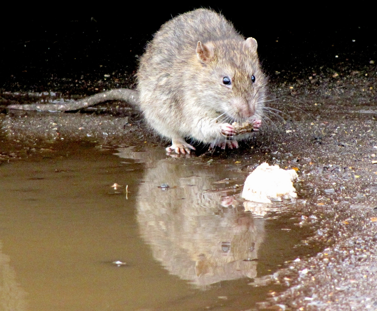 South America: Lethal Hantavirus expected to spread due to climate change