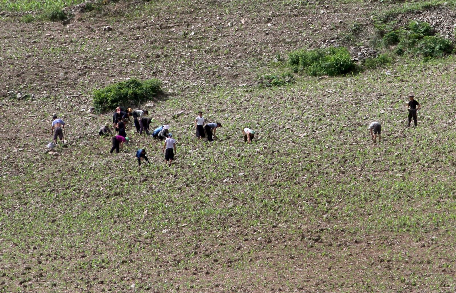North Korea drought