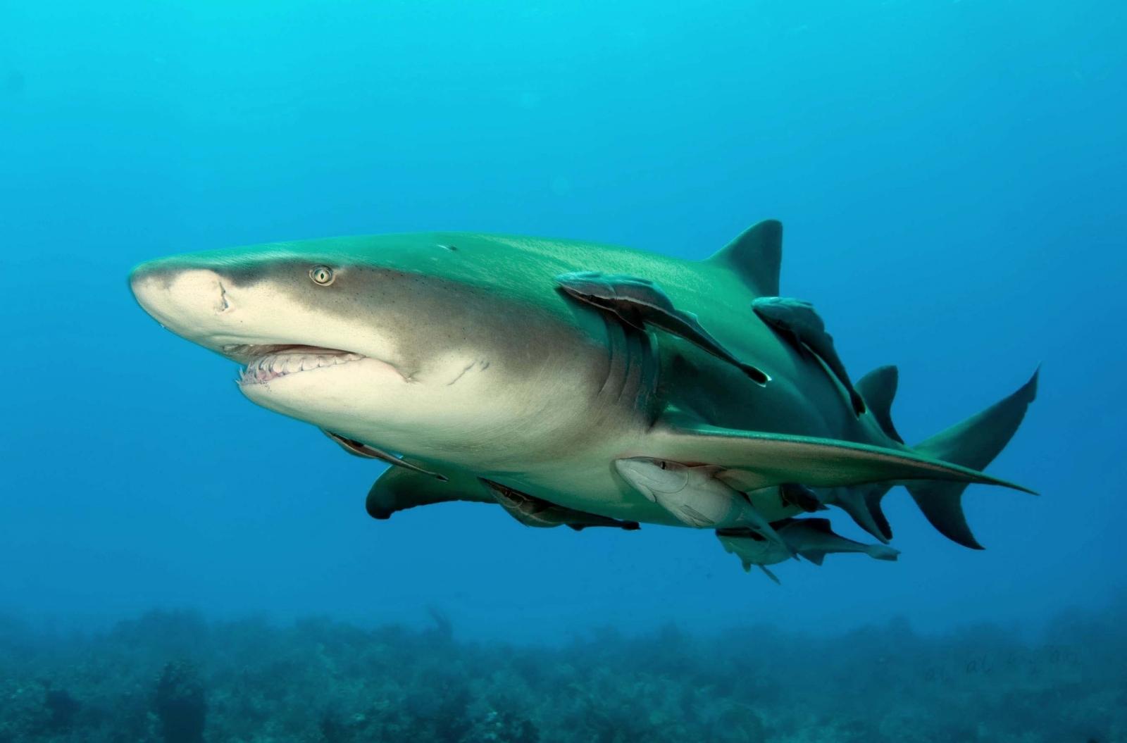 Shark Week 2017: World\'s deadliest shark species to give you nightmares