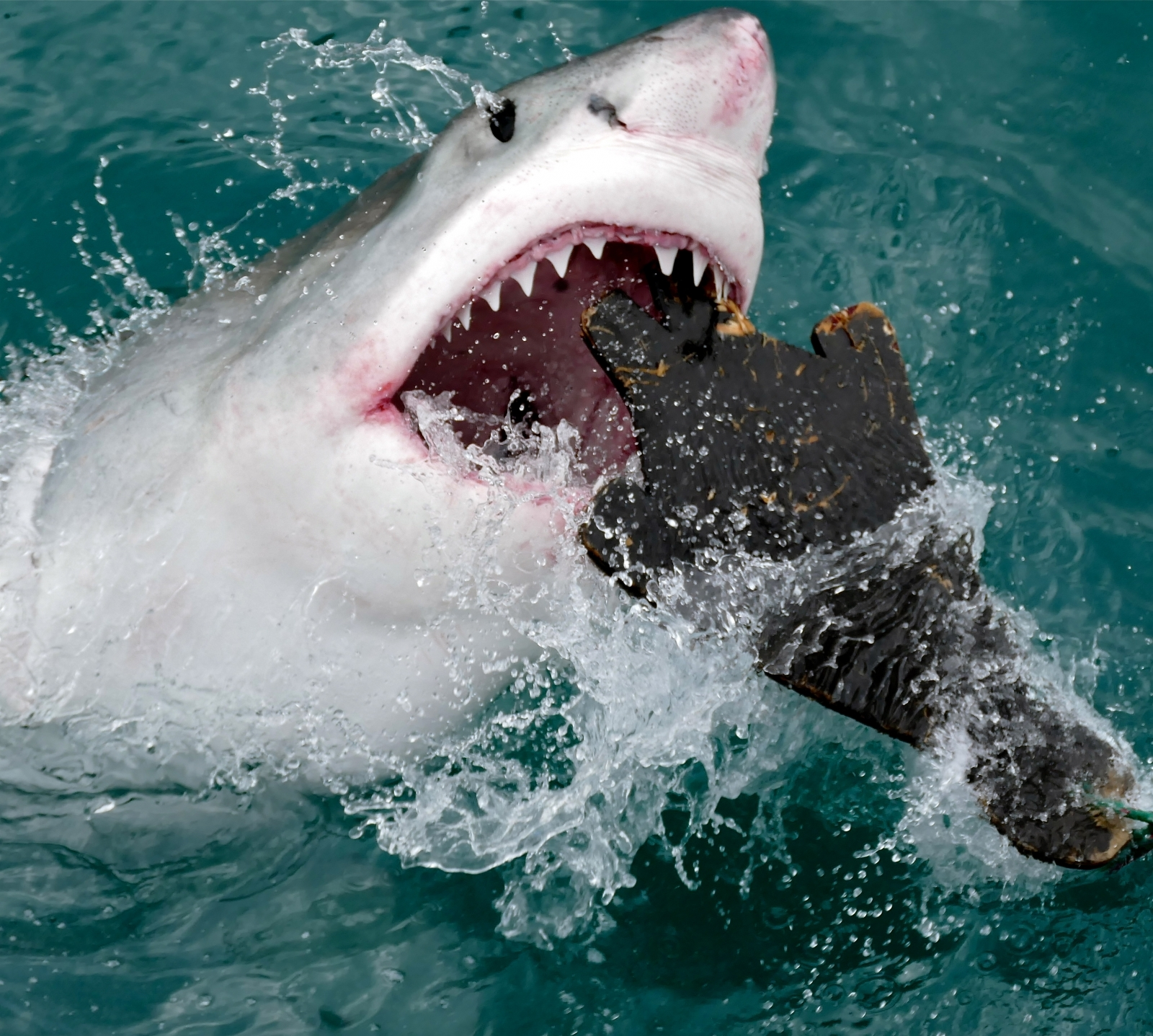 A new kind of drum line is keeping sharks away from popular beaches and protecting swimmers