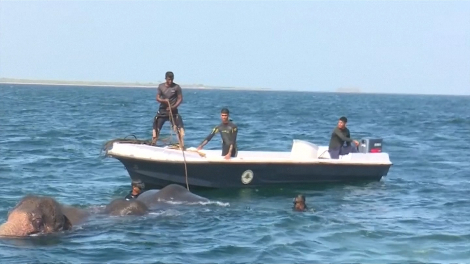 Two wild elephants swept out to sea rescued by Sri Lankan navy