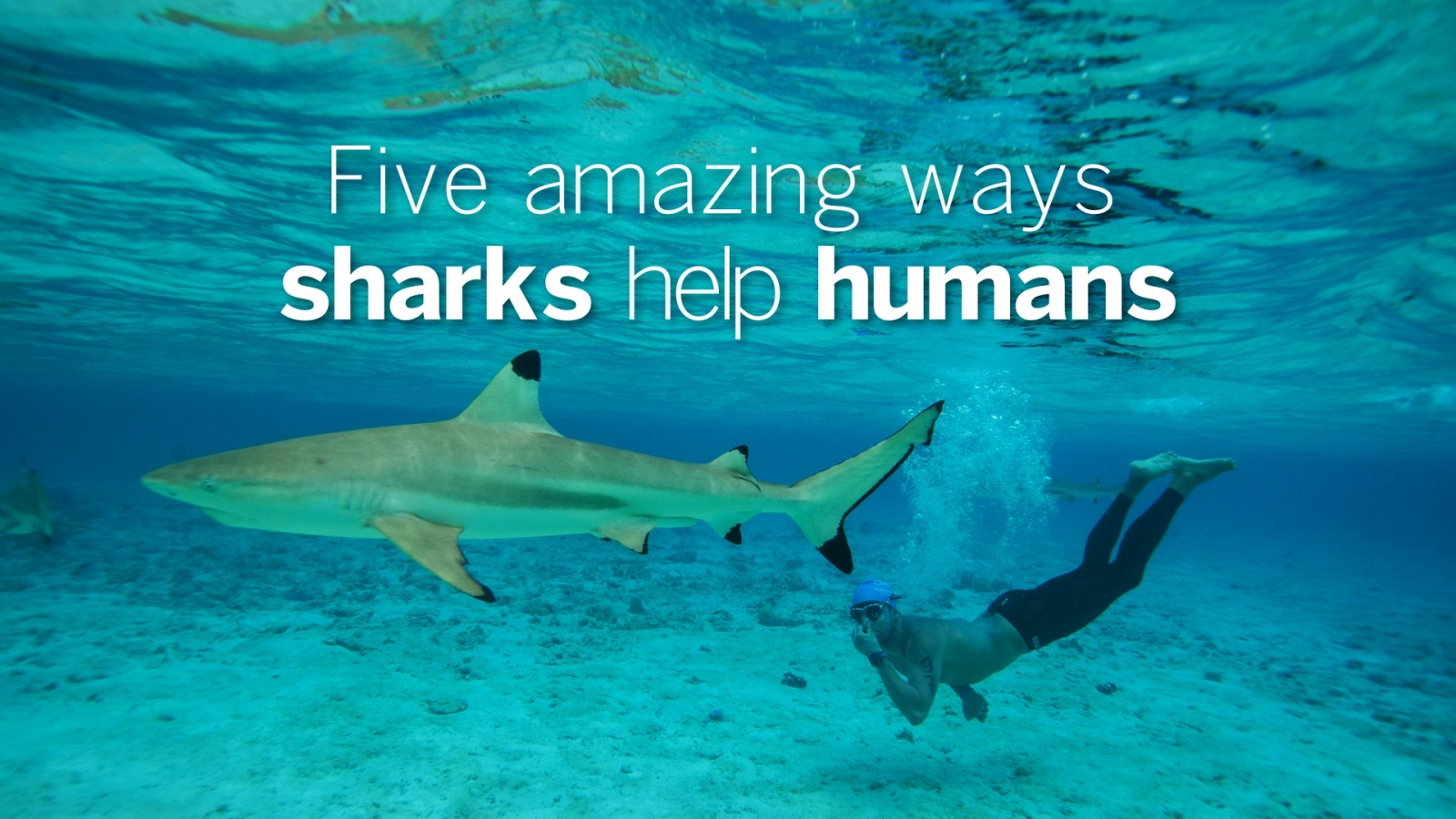 Five amazing ways sharks help humans