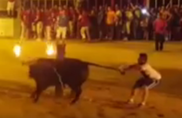 Bulls dies in Spain
