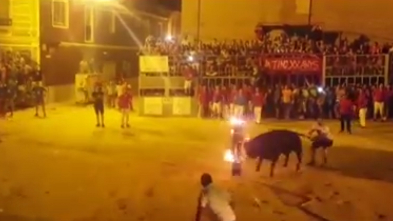 Shocking video shows bull dying after having horns set on fire