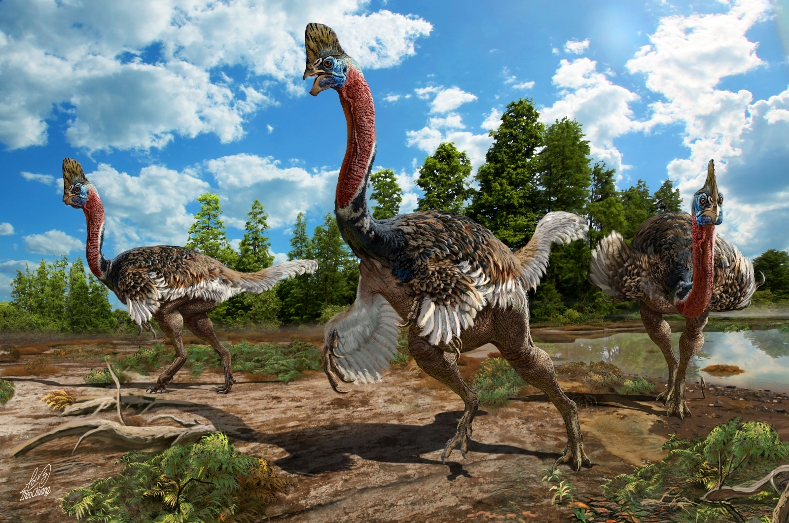 Corythoraptor jacobsi