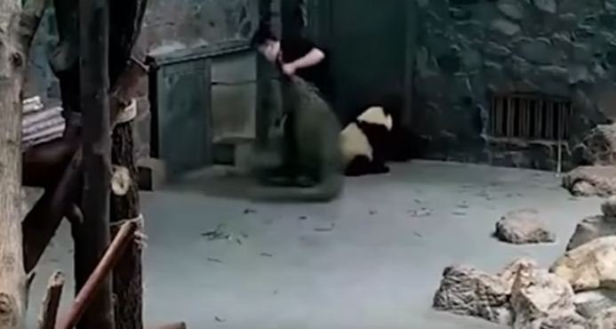 Chinese research facility under fire amid mistreatment of two giant panda babies accusations