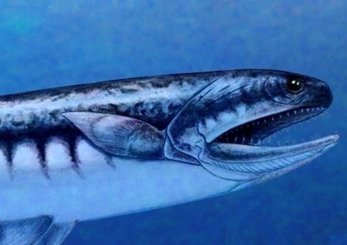 Triassic Jaws Fish Became The Ocean S Top Predator After
