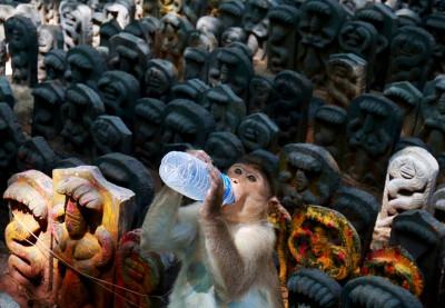 Nag Panchami Hindu snake festival
