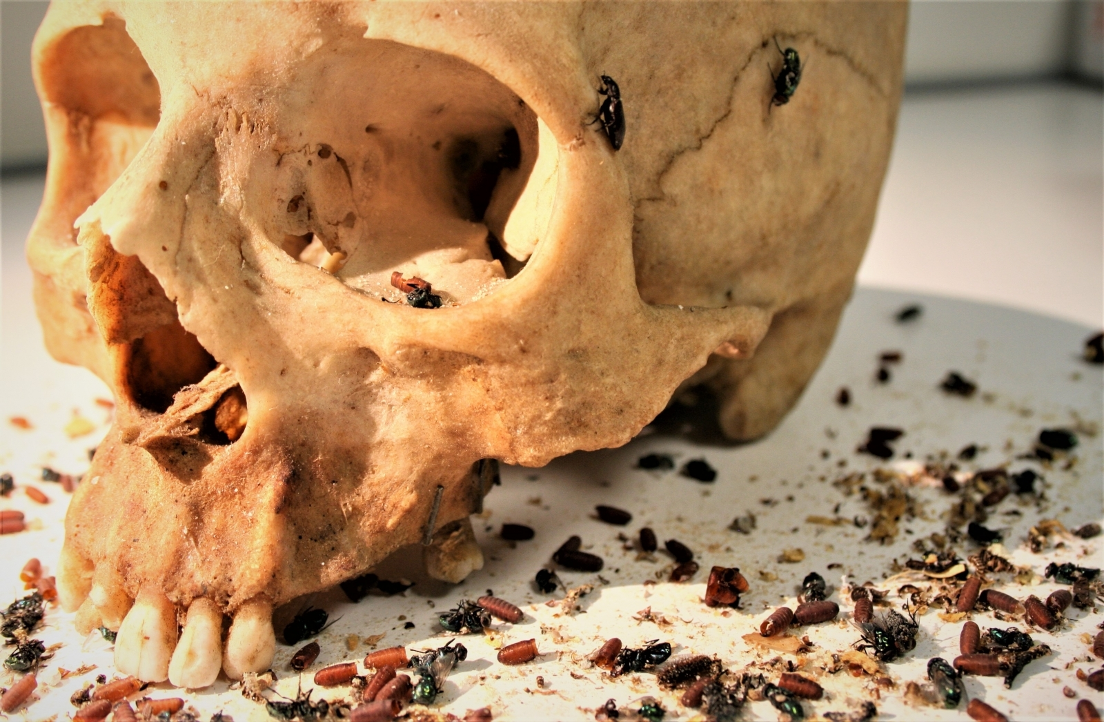 forensic entomology Forensic entomology may even help in investigations dealing with people who  are alive but in need of care, by revealing information about.