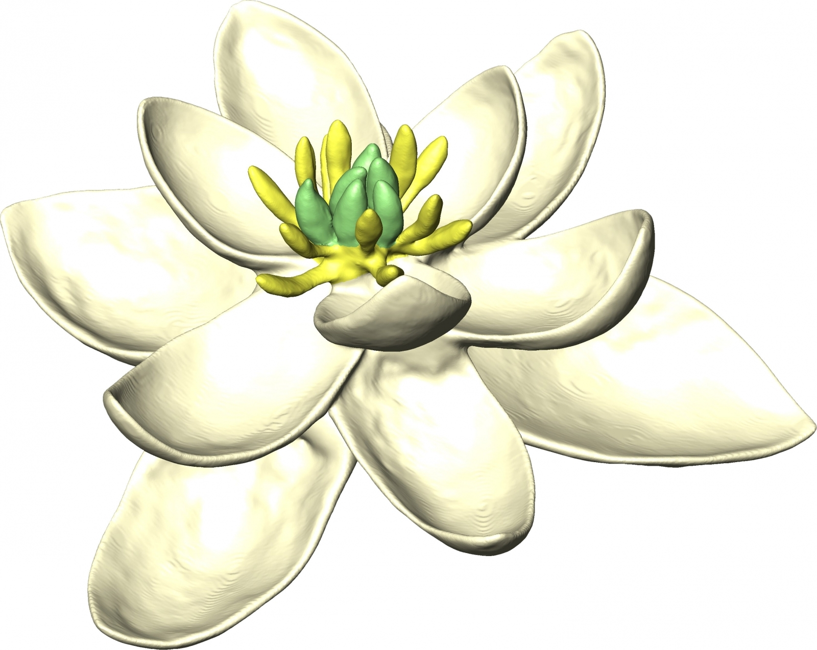 Scientists Reconstructed The Ancient Mother of All Flowers