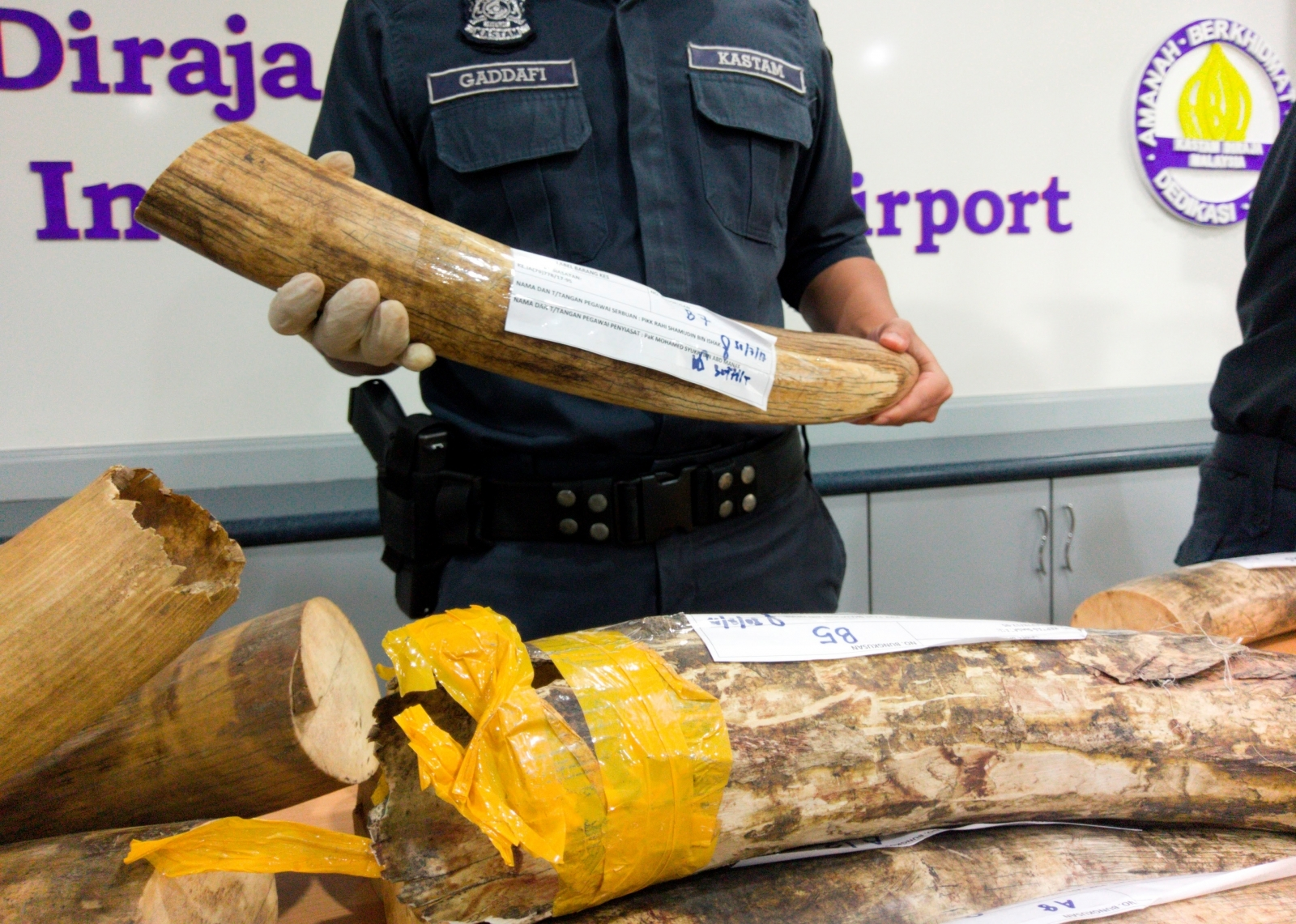 Ivory tusks seized