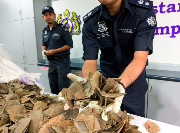 Pangolin scales seized in Malaysia