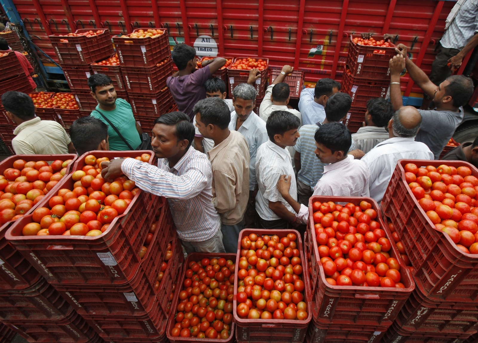 Tomatoes, India