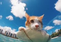 Surfing Cat