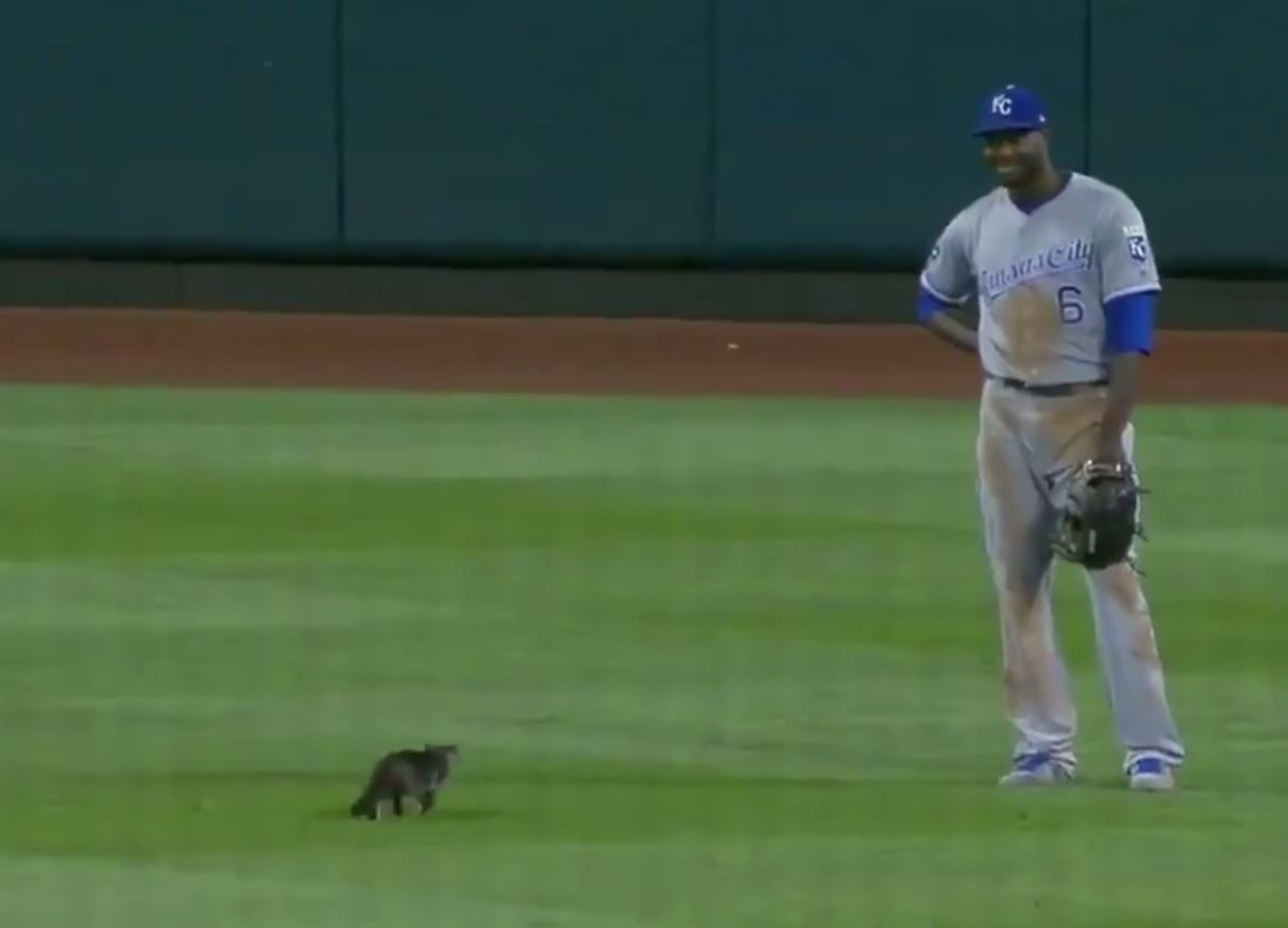 Cat On Field At Baseball Game