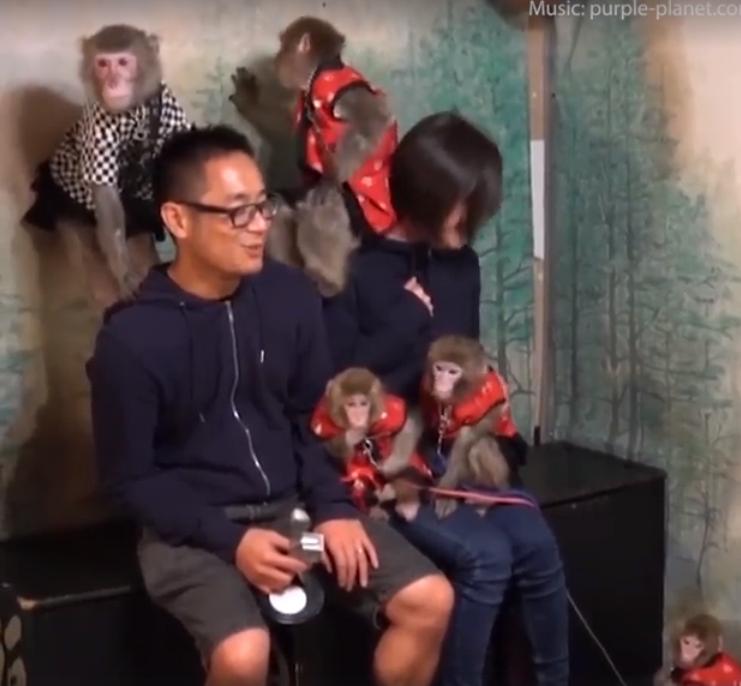 Fuku-chan – the Macaque monkey
