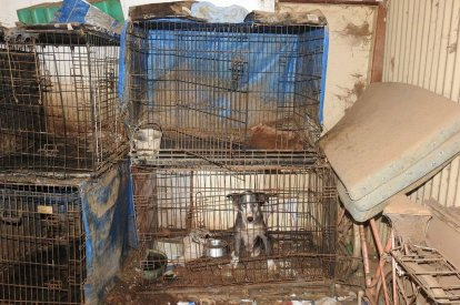 Dogs rescued from squalid conditions