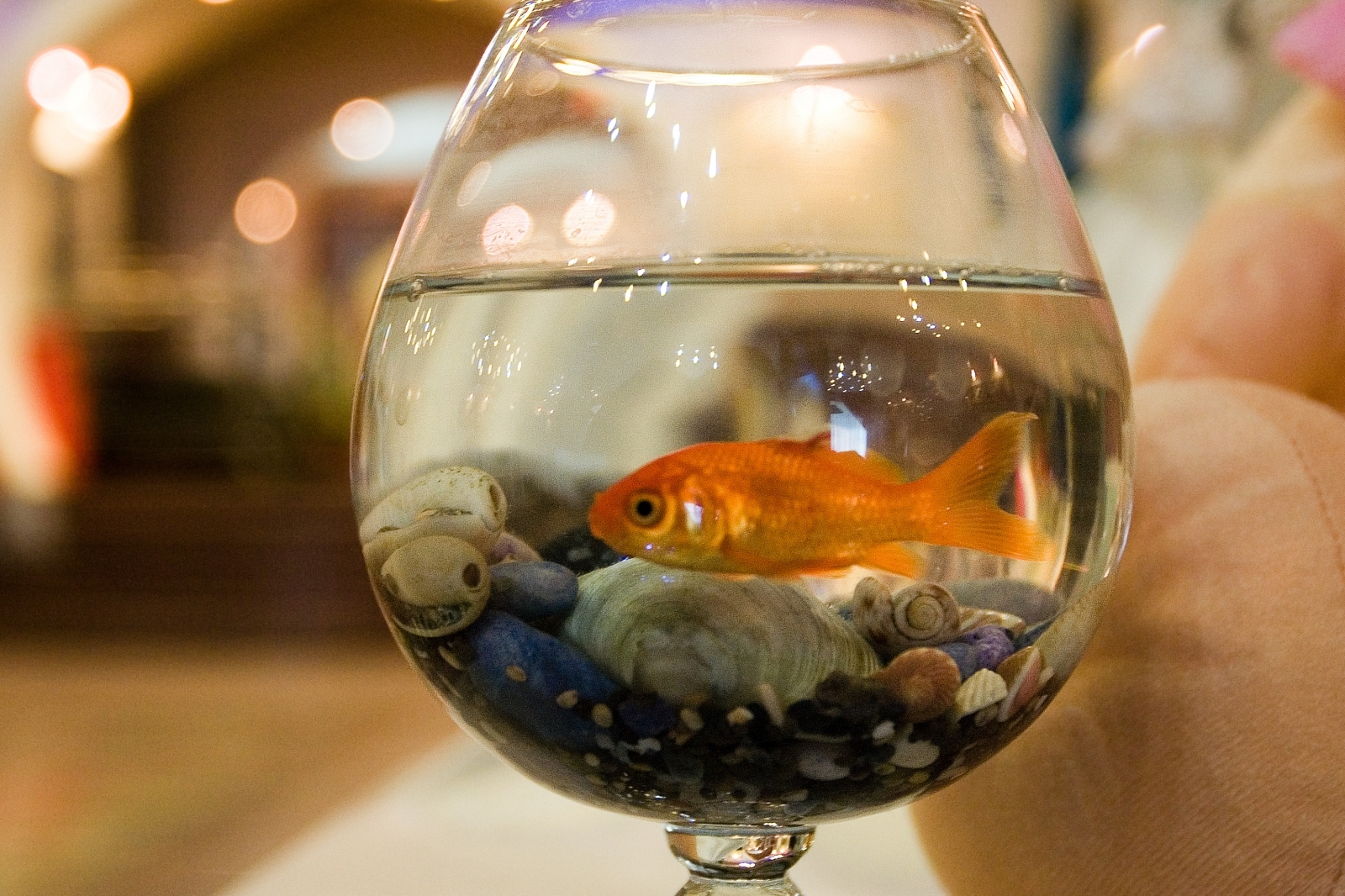 Goldfish use alcohol to survive in icy waters, scientists find
