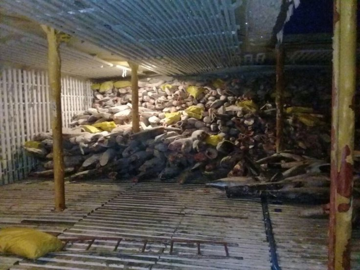 A haul of sharks inside the hold of Chinese refrigerator ship Fu Yuan Yu Leng 999