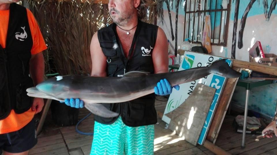 Baby dolphin killed spain