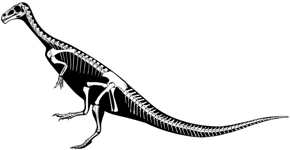 Vegan raptor may be missing link between two major dino groups