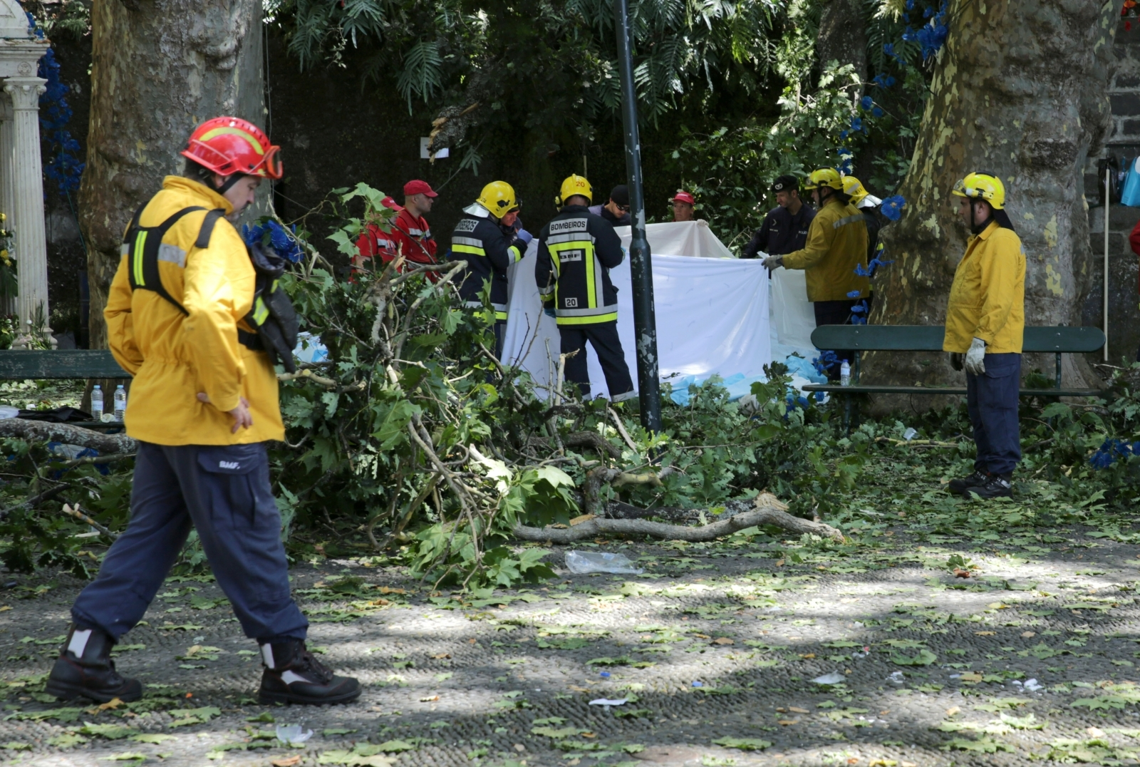 Falling tree kills multiple people in Portugal