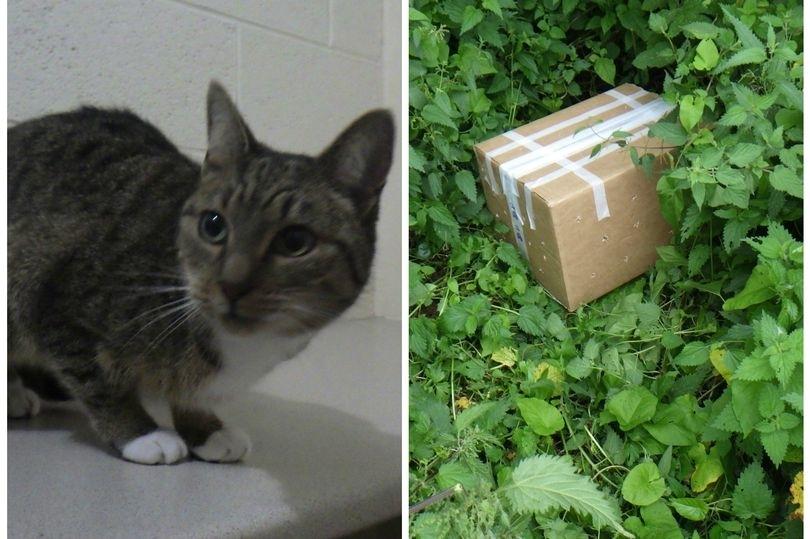 Cat in a box Wales