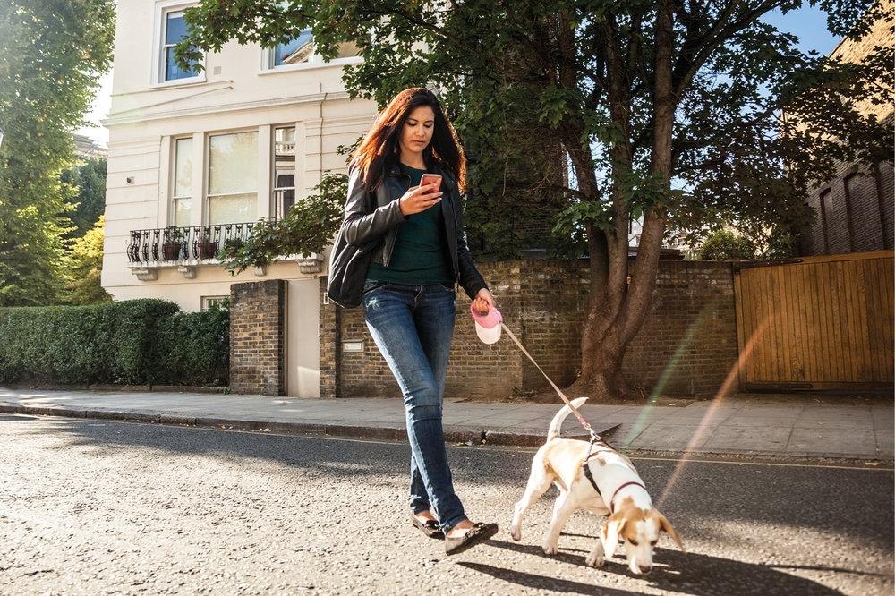smartphone behaviour dogs