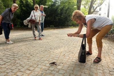 Berlin tiergarten crayfish krebse