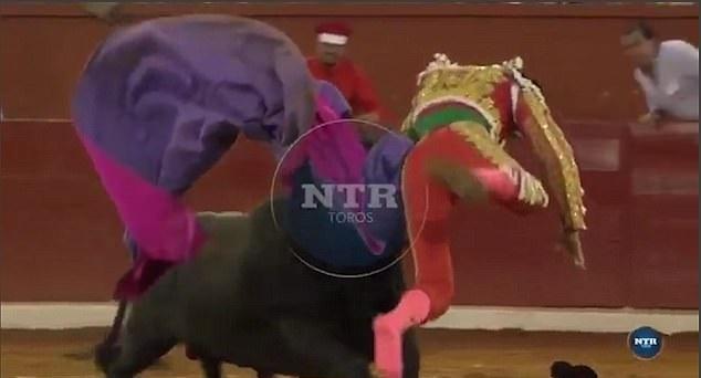Matador impaled by bull
