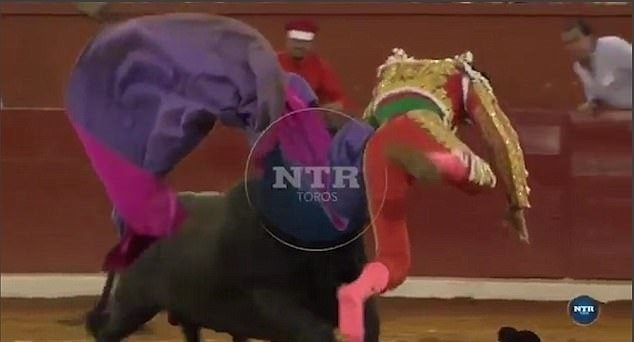 Matador impaled by bull
