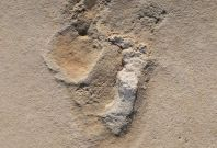 Human-like fossil footprints found in Crete