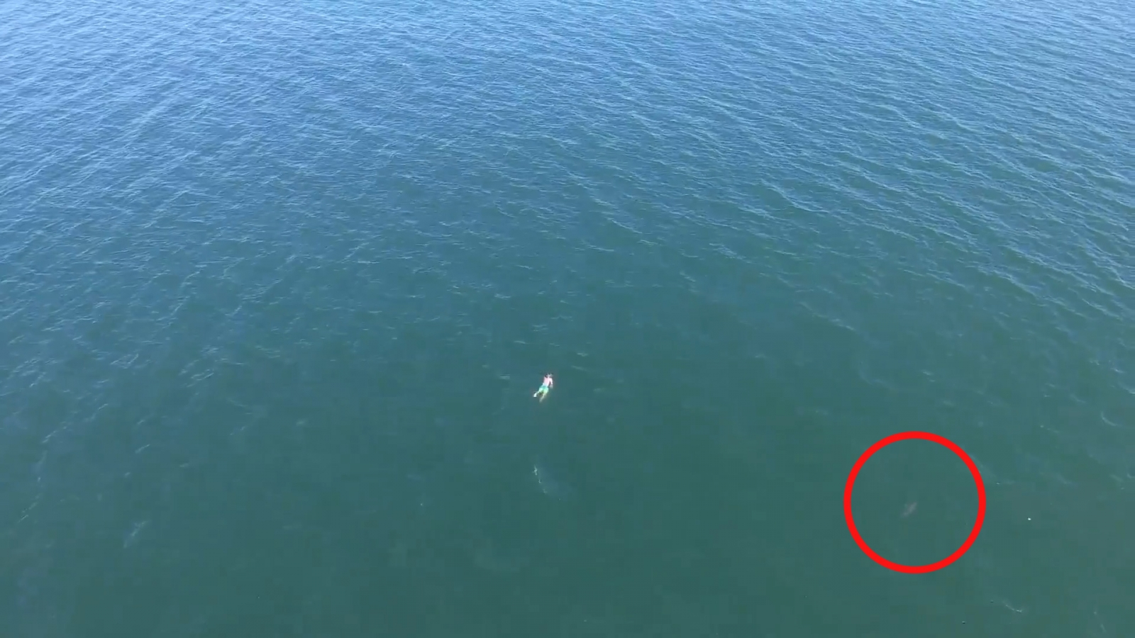 Man Swims A Mile Out To Sea To Escape Police Then Needs