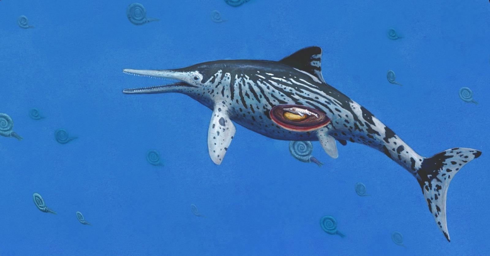 Ichthyosaurus sea dragon fossil