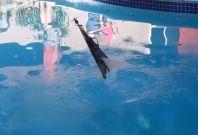 Flying Fish amphibious drone